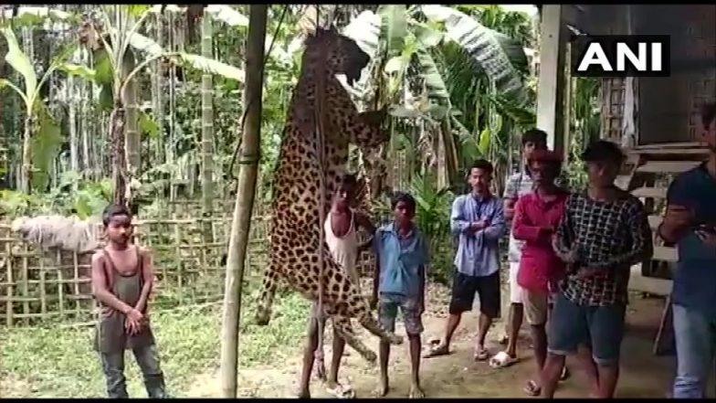 Assam Villagers Kill Leopard:নৃশংশতার নজির, চিতাবাঘকে মেরে চোখ উপরে থাবা কেটে নিল গ্রামবাসীরা
