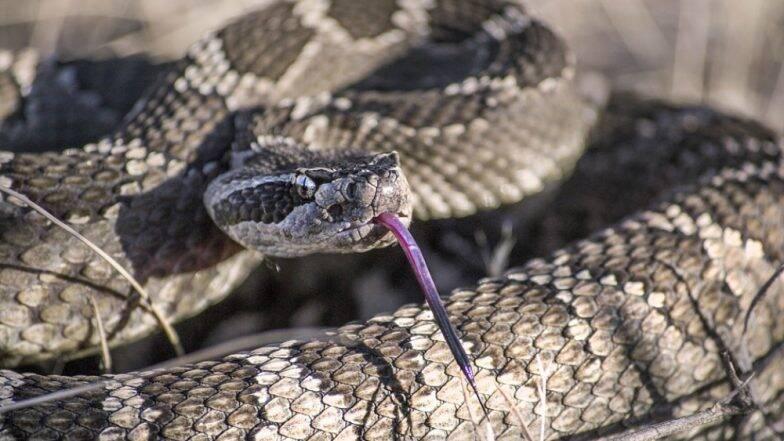 Snake Bite: ছোবল মারা সাপকে সঙ্গে বেঁধে হাসপাতালে নিয়ে গিয়ে উপস্থিত বুদ্ধির পরিচয় মহিলার