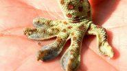 Endangered Tokay Gecko: বিপন্ন প্রজাতির তক্ষক 'টোকাই গোকো' HIV সারাতে ও যৌনক্ষমতা বাড়াবে, দাবি বন্যপ্রাণ সংরক্ষণ কর্মীর