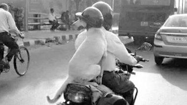 সংশোধিত মোটর ভেহিকলস আইনের জুজু? দিল্লিতে হেলমেট মাথায় স্কুটার চড়ল কুকুর!