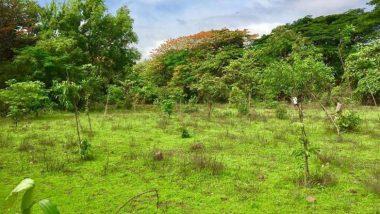 Aarey Tree Felling: পরবর্তী শুনানি পর্যন্ত আর একটিও গাছ কাটা যাবে না, আরে কলোনি নিয়ে স্থগিতাদেশ সুপ্রিম কোর্টের
