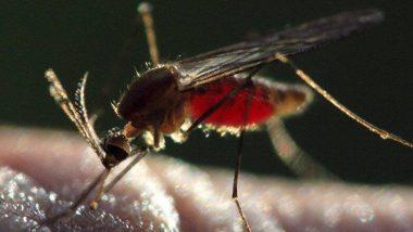 Coronavirus: করোনাভাইরাসকে প্রতিরোধ করতে সক্ষম ডেঙ্গু, গবেষণায় উঠে এল তথ্য