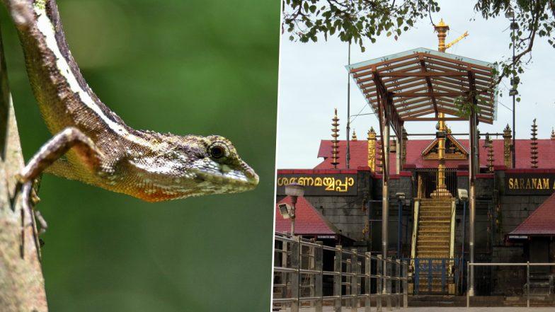 Dead Lizard in Sabarimala Offering: শবরীমালার প্রসাদে মরা টিকটিকি! তদন্তের নির্দেশ দিল কেরালা পুলিস