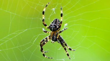 Spider Names After Sachin: মাকড়শার নাম সচিন তেন্ডুলকর!