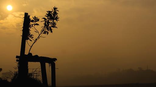 West Bengal Weather Update: এই সপ্তাহে পারদ নামার সম্ভাবনা নেই রাজ্যে