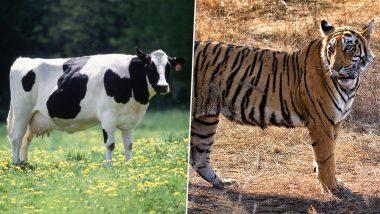 National Animal Cow: গরুকে জাতীয় পশু করা হোক, দাবি হিন্দু ধর্মগুরু বিশ্বেসা তীর্থ স্বামীর!