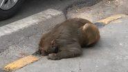 Maneka Gandhi Rescues Monkey: বাঁদর উদ্ধার করে নেটিজেনদের প্রশংসা কুড়োলেন সাংসদ মানেকা গান্ধী