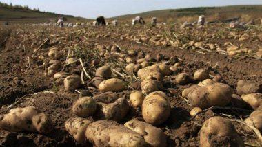 Potato Price Hike: আবার বাড়ল আলুর দাম, জানুন কত হল!
