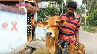 Man Wants Gold Loan Against Cows: দিলীপ ঘোষের দাবিতে ভরসা, গোল্ড লোন পেতে গোরু নিয়ে হাজির কৃষক!