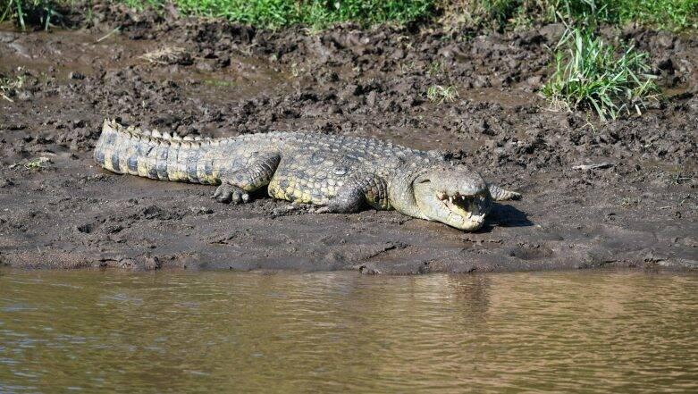 Man Sticking Thumb Eye Of Crocodile : কুমিরের চোখে আঙুল দিয়ে দেখিয়ে দিলেন... এভাবেও ফিরে আসা যায়