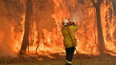 Australia Bush Fire: বৃষ্টিতেও মেলেনি রেহাই, দাবানলের আগুন দূরত্ব ঘুচিয়েছে পশু-মানুষের