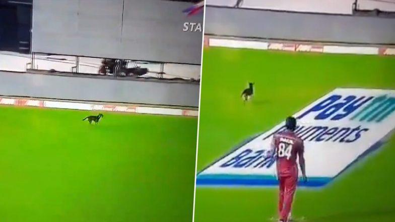 India vs West Indies 1st ODI 2019: চলতি ম্যাচেই ক্রিকেট পিচে তেড়ে এল কুকুর! দেখুন ভিডিও
