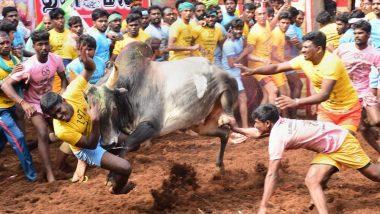 Jallikattu In Tamil Nadu: তামিলনাড়ুতে জাল্লিকাট্টু উৎসবে ষাঁড়ের গুঁতোয় মৃত্যু হল এক যুবকের