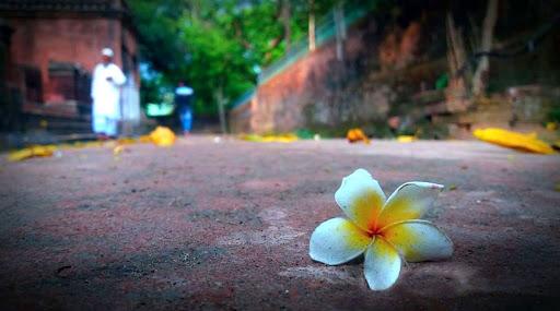 Weather Update: নামছে পারদ, বুধবার থেকে জাঁকিয়ে শীত রাজ্যে
