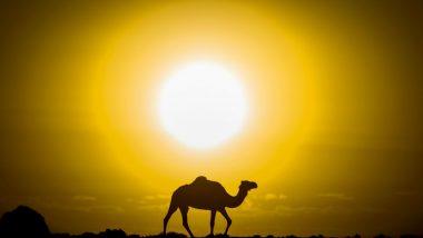 Camels Shot Dead In Australia: ৫ দিনে ৫ হাজারেরও বেশি উট হত্যা অস্ট্রেলিয়ায়