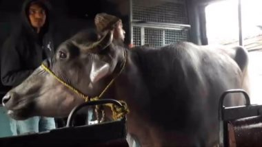Buffalo Takes Ride In Local Train: হনুমানের পর ট্রেনে চড়ল মোষ! ভাইরাল ভিডিয়ো