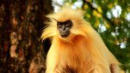 Golden Langur: মারা গেল অসমের উমানন্দ দ্বীপের একমাত্র সোনালি ল্যাঙ্গুর গোবিন্দা