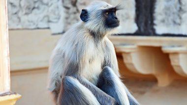Donald Trump Visit To India: 'বাঁদরামি' রুখতে ডোনাল্ড ট্রাম্পের নিরাপত্তায় মোতায়েন ৫ বাঁদর!