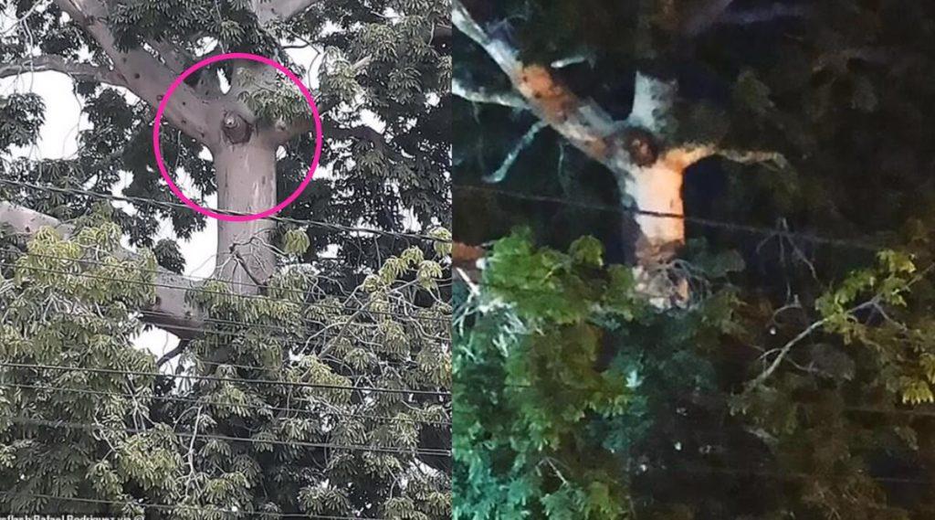 Viral: গাছে ক্রুশবিদ্ধ যীশুর ছবি! লকডাউন ভেঙে দেখতে ছুটল সাধারণ মানুষ