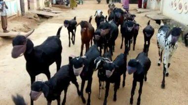 Man Ties Masks On His Goats: করোনা আতঙ্কে পোষা ছাগলদের মাস্ক পরালেন ব্যক্তি! ভাইরাল ছবি