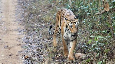 2018 Tiger Census: দীর্ঘতম ক্যামেরা-ফাঁদ পেতে সার্ভে, গিনেস বুকে নাম তুলল ভারতের বাঘ শুমারি