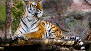 Indian Zoos On High Alert: মার্কিন মুলুকের বাঘিনী নাদিয়ার শরীরে কোভিড-১৯ পজিটিভ, ভারতের সমস্ত চিড়িয়াখানায় জারি চূড়ান্ত সতর্কতা