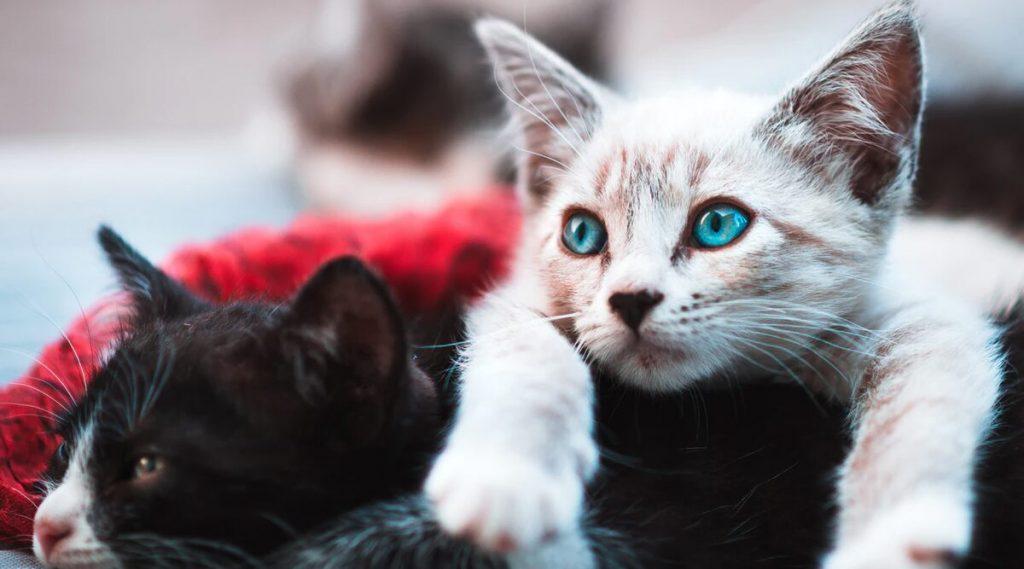 Covid-19 Infected Cats: মার্কিন মুলুকে প্রথম করোনায় আক্রান্ত ২ পোষ্য বিড়াল