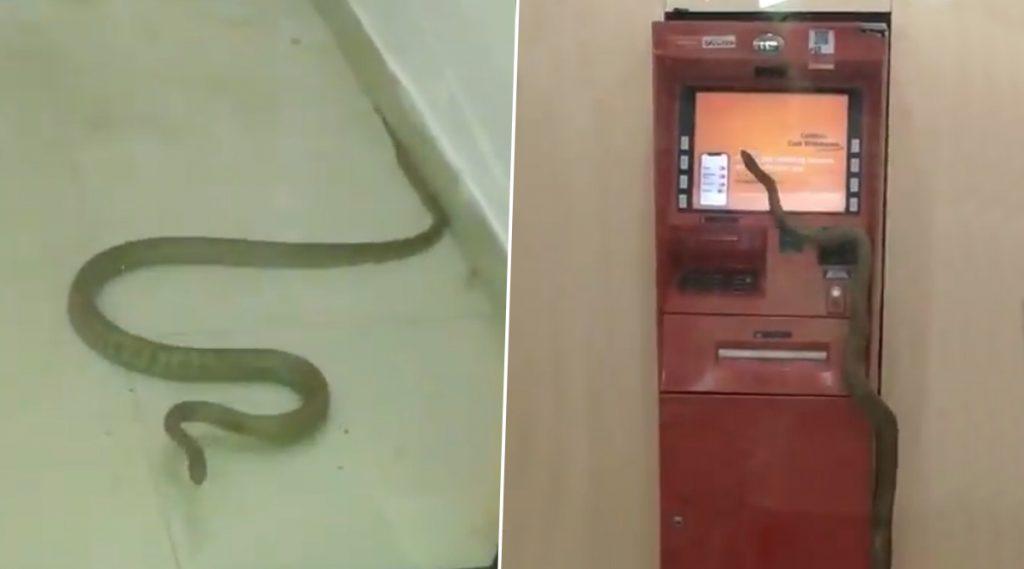 Snake Spotted Inside ATM: এটিএমে সাপ! ভাইরাল ভিডিয়ো