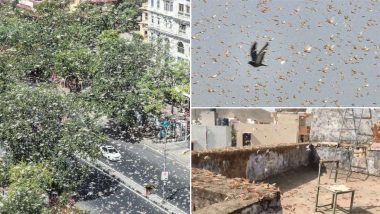 Locust Swarm Attacks North India: করোনার মধ্যে পঙ্গপালের ত্রাস, চিন্তায় উত্তরপ্রদেশ, মধ্যপ্রদেশ ও রাজস্থানের চাষীরা (দেখুন ভিডিও)