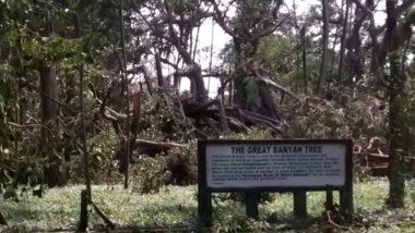 The Great Banyan Tree In Kolkata: আড়াই দশকে আম্ফান-সহ তিনটে বড় ঘূর্ণিঝড় সামলে মাথা উঁচু করে দাঁড়িয়ে ২৫০ বছরের বট গাছ