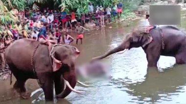 Pregnant Elephant Died In Malappuram: কেরালায় নৃশংসভাবে গর্ভবতী হাতি হত্যা, বণ্যপ্রাণী সুরক্ষা আইনে মামলা রুজু পুলিশের