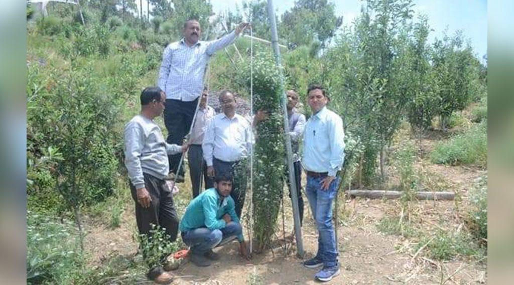 World's Tallest Coriander Plant: বিশ্বের সব চেয়ে লম্বা ধনেগাছ, জানুন ঠিক কতটা লম্বা আর কোথায় চাষ হয়েছে