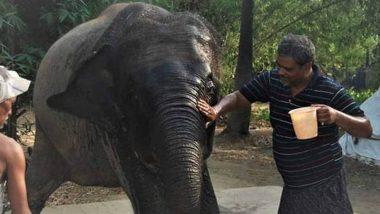 Bihar Animal Lover: ২ পোষ্য হাতি যেন খেয়ে পড়ে বাঁচে, নিজের সমস্ত জমি তাদের নামে লিখলেন এই পৌঢ়