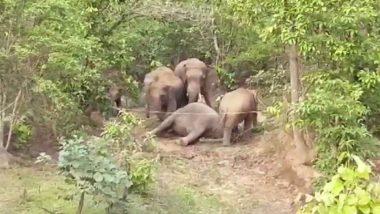 Elephant Dies: জঙ্গলে মৃত হাতির দেহ ঘিরে সার দিয়ে দাঁড়িয়ে বুনো হাতির দল, ব্যর্থ মনরথে ফিরতে হল বনকর্মীদের