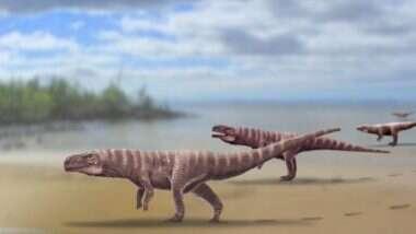 Giant 120 MillionYear Old Crocodile: ডাইনোসরের মতো দু'পায়ে হাঁটত, ১২ কোটি বছর আগে পৃথিবীতে রাজত্ব করত এই কুমীর