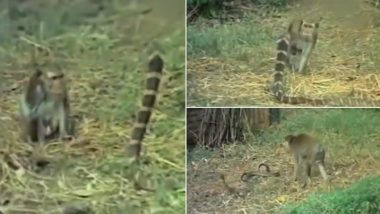 Viral Video: সাপ-নেউলের লড়াই দেখেছেন, এবার সাপ-বাঁদরের লড়াই দেখুন