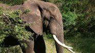 Animal Abuse: আতশবাজি ভরা আনারস খেয়ে মৃত্যু গর্ভবতী হাতির, এলাকাবাসীর নৃশংস ঘটনায় নিন্দার ঝড়