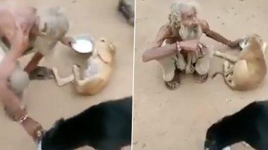 Beggar Feeds Street Dogs: 'ধন-সম্পদে দরিদ্র, হৃদয়ে ধনী', কুকুরকে যত্ন করে খাওয়াচ্ছেন ভিখারি; ভাইরাল ভিডিয়ো