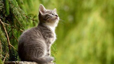 Kitten Burned Alive With Lighter: আগুন লাগিয়ে জ্বালিয়ে দেওয়া হয় বিড়ালকে, অভিযুক্তের মাথার দাম ধার্য ৫০ হাজার