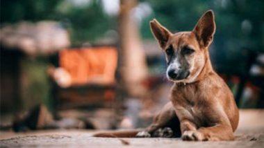 Nagaland Bans Sale Of Dog Meat: নাগাল্যান্ডে নিষিদ্ধ কুকুরের মাংস, কেন জানেন?