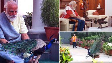 PM Narendra Modi: ময়ূরকে নিজের হাতে খাওয়ানোর ভিডিও সোশ্যাল মিডিয়ায় শেয়ার করলেন প্রধানমন্ত্রী নরেন্দ্র মোদি