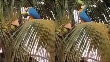 Parrot Drinking Coconut Water: তৃষ্ণা মেটাতে গাছে উঠে ডাবের জল খাচ্ছে তোতাপাখি! দেখুন ভিডিয়ো