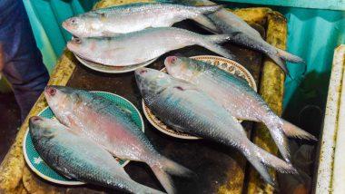 20 Metric Ton Bangladeshi Hilsa Fish Brought to Howrah: বাংলাদেশ থেকে রাজ্যে এল ২০ মেট্রিক টন টাটকা ইলিশ, কত দামে বিক্রি হচ্ছে?