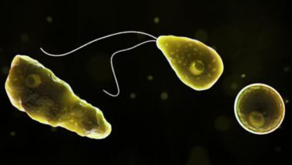 Brain-Eating Amoeba: টেক্সাসের জলে বাসা বেঁধেছে মগজখেকো অ্যামিবা, মৃত্যু নাবালকের