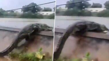 Crocodile 'Suicide' in Gujarat! গুজরাতের লেকের উপর ঝাঁপ দিয়ে 'আত্মহত্যা' করল কুমিরটি?