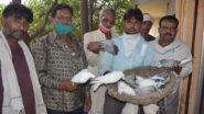 Uttar Pradesh: বাড়ির সামনে যত্রতত্র থুতু ফেলতে নিষেধ করেছিলেন, প্রতিবেশির ১১টি পায়রাকে হত্যা করে রাগ মেটালো যুবক