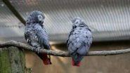 Zoo Removes 5 Parrots For Swearing: দর্শকদের খারাপ খারাপ কথা, চিড়িয়াখানা থেকে ৫টি আফ্রিকান ধূসর তোতাকে সরিয়ে দেওয়া হল