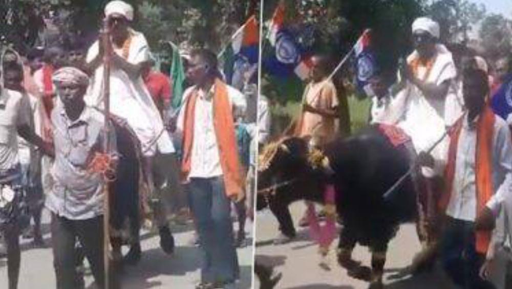 Bihar Assembly Elections 2020: ষাঁড়ের পিঠে চড়ে মনোনয়ন জমা দিতে গেলেন বিহার বিধানসভা নির্বাচনের নির্দল প্রার্থী(দেখুন ভিডিও)
