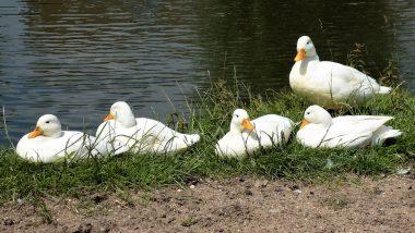 Russia: নদীর জল হয়েছে রক্তের মত লাল, জলে নামল না হাঁসেরাও