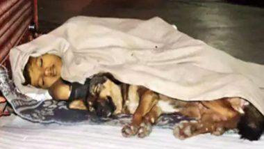 Homeless Boy Sleeping With Dog: বাড়ি থেকে বিতাড়িত কিশোর, সঙ্গ ছাড়েনি পোষ্য! প্রবল ঠান্ডায় এক কম্বলের নীচের রাত কাটাচ্ছে অঙ্কিত-ড্যানি
